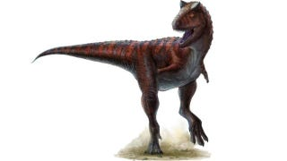 Illustration for article titled Carnotaurus had the most ridiculously powerful dinosaur tail ever