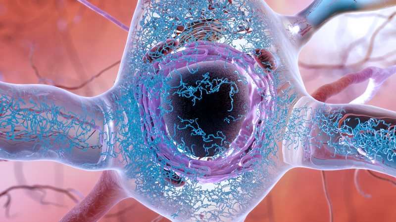 A close-up illustration of abnormal tau tangles, in blue, which play a debated role in Alzheimer's disease.
