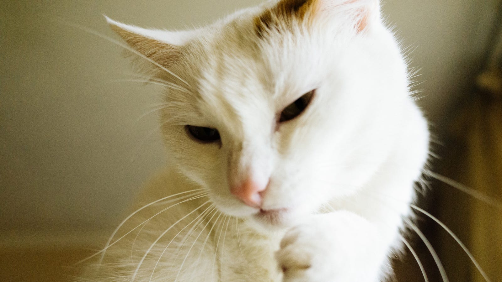 Scientists Have Created a Vaccine for Cat Allergies, but You Can't Have It Yet