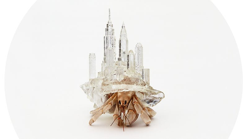 Illustration for article titled These hermit crabs carry 3D-printed cityscapes on their backs