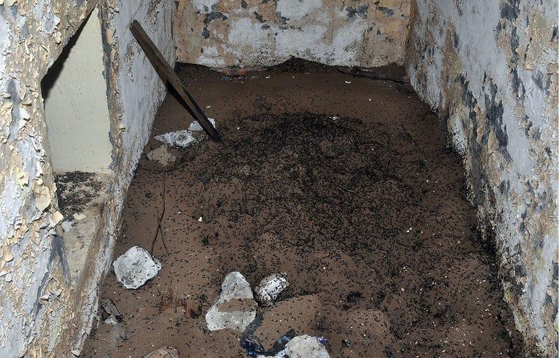 Imagen de la colonia en el búnker abandonado. Fotos: Stephan Wojciech