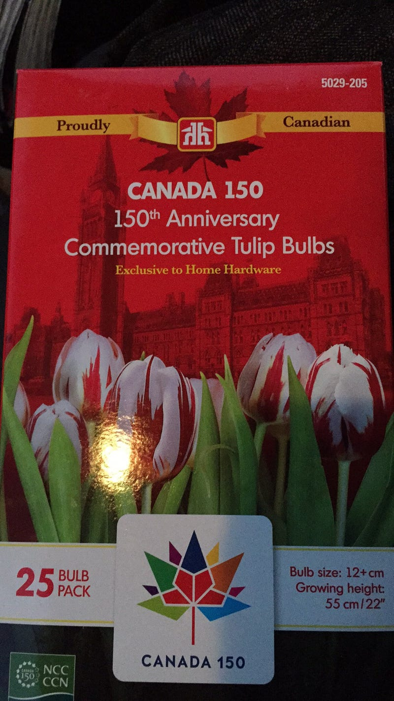 Illustration for article titled Canada 150 tulip bulbs are in