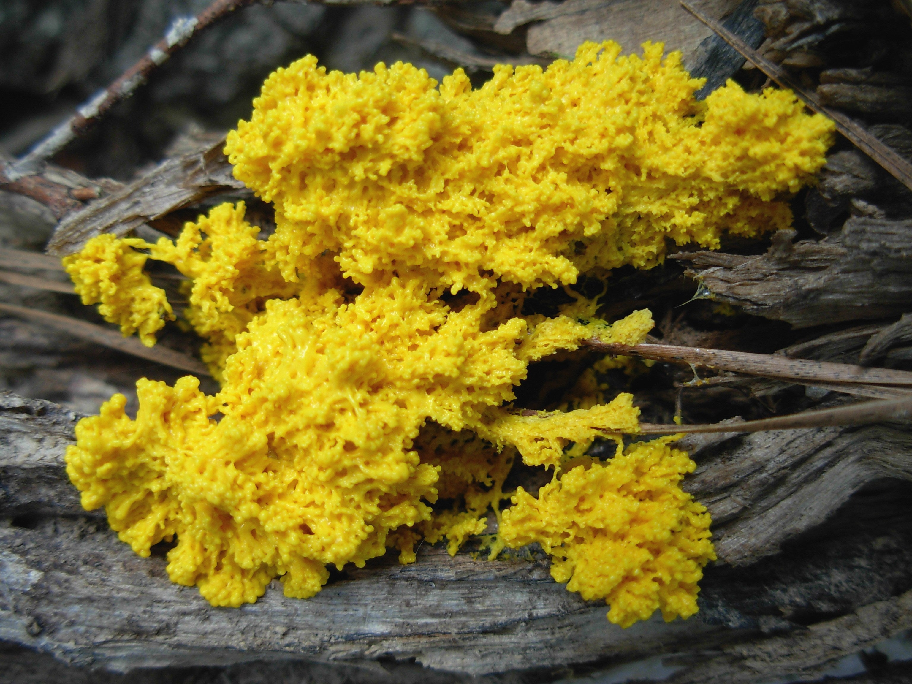 The Game of Thrones Intro Recreated with Slime Mold Is ...