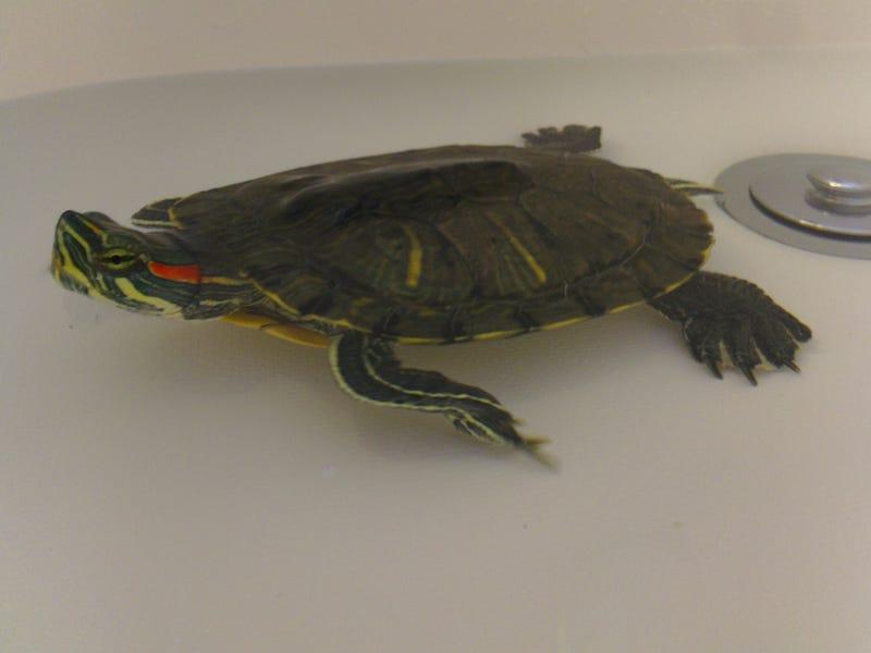 Illustration for article titled Turtle Time Turtle Talk