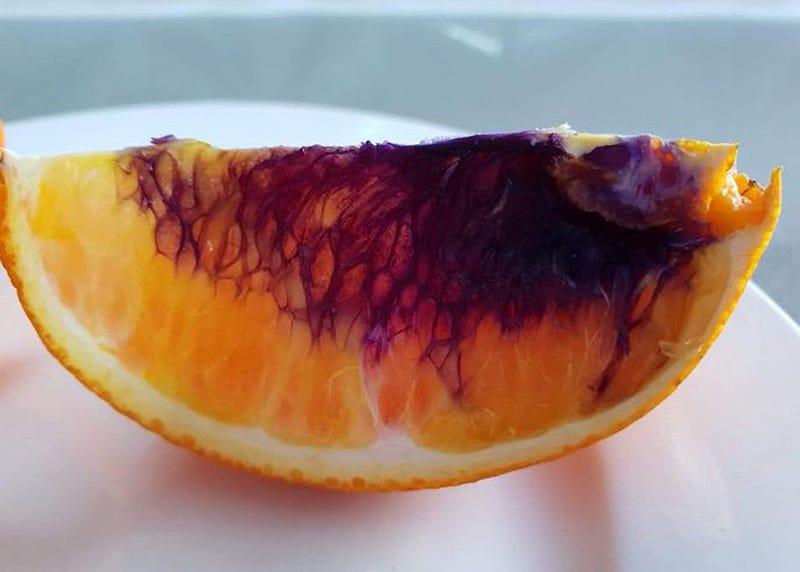 Illustration for article titled Científicos australianos no logran averiguar por qué estas naranjas se tornan moradas de la noche a la mañana