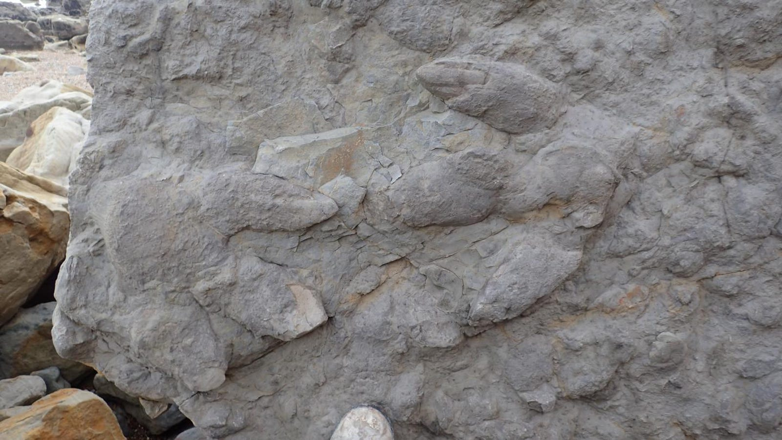 Look at These Incredible Dinosaur Footprints Found in England