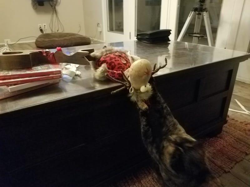 Kürbis hat den Weihnachtsgeist