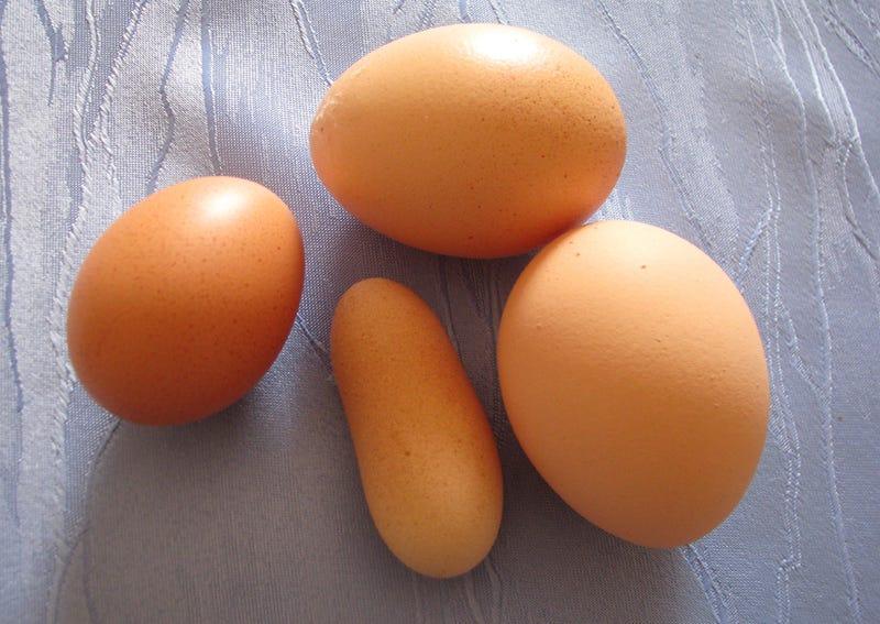 Illustration for article titled Oszkó Péter alakú tojást tojt egy tyúk Tevelen