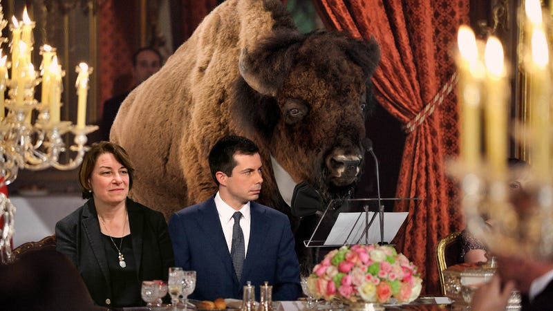 Nation's Bison Hold Lavish Fundraiser In Effort To Get 2020 Candidates To Support Environment
