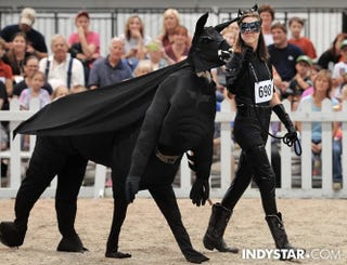 Illustration for article titled This Is A Llama Dressed Up As Batman. Your Move, Affleck.