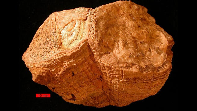 Days on Earth Used to Be 30 Minutes Shorter, Ancient Shell Suggests