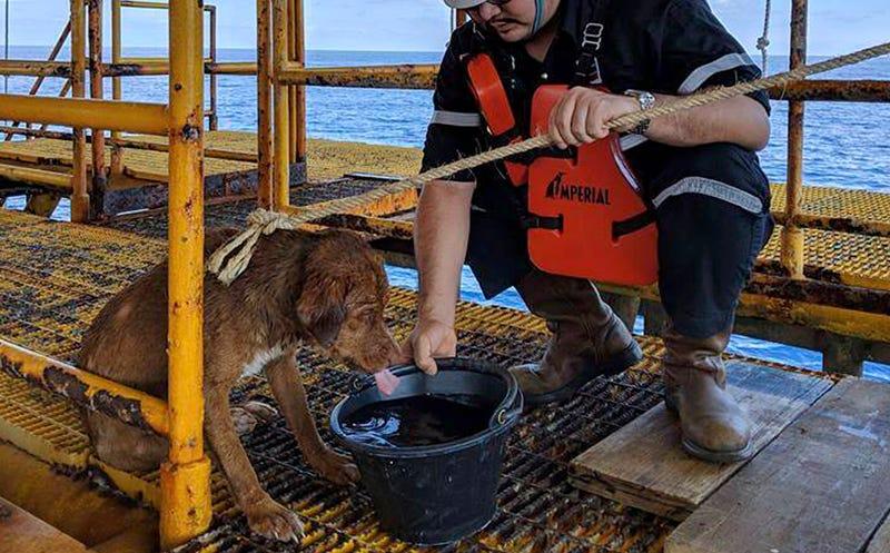 Illustration for article titled Una de estas dos teorías explicaría qué demonios hacía un perro nadando a 220 kilómetros de la costa de Tailandia