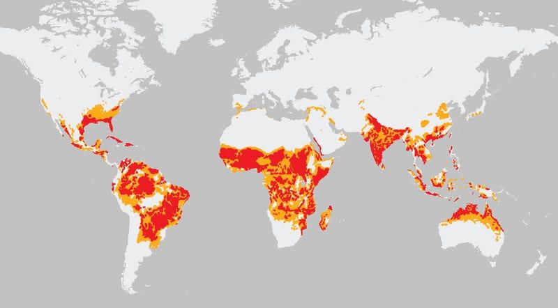 Illustration for article titled Los países donde los mosquitos causan más enfermedades