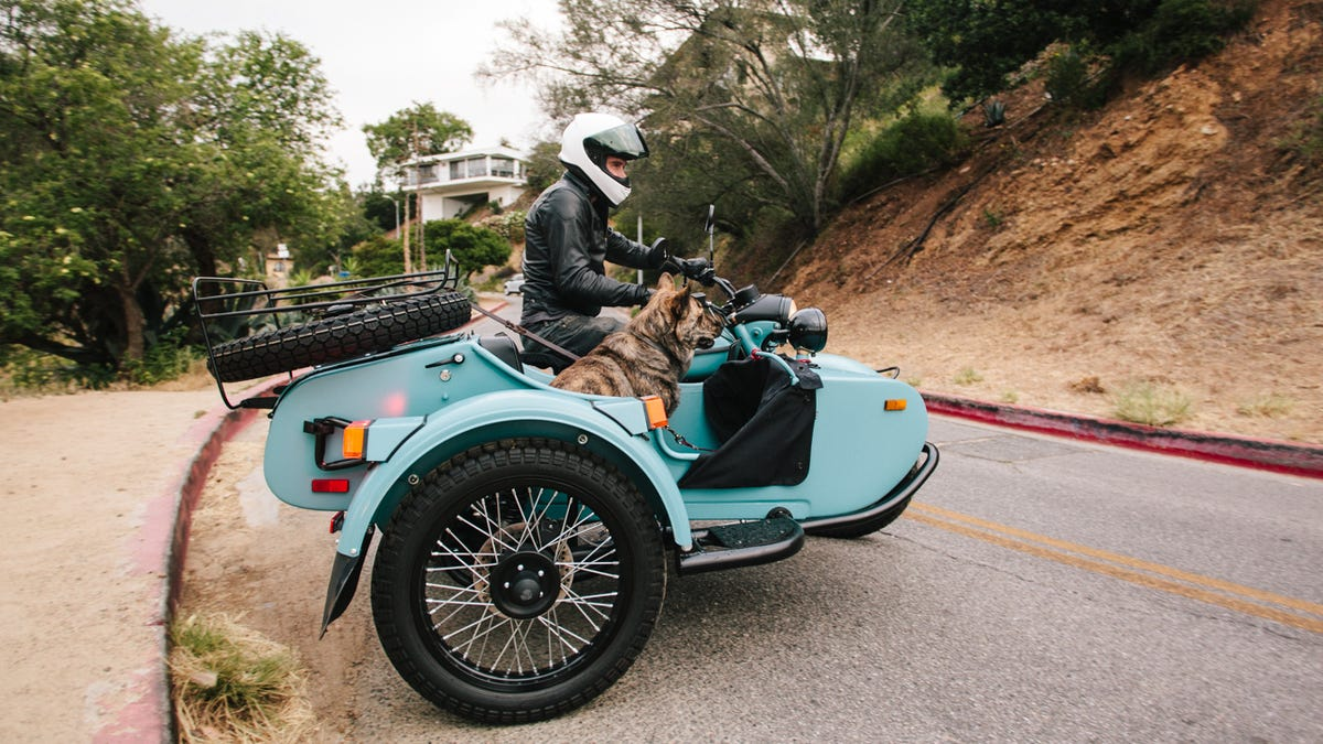 Dogs And Sidecars, A Match Made In Motorcycle Heaven