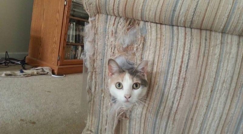 Illustration for article titled La verdadera razón por la que los gatos arañan el mobiliario (no, no se están afilando las uñas)