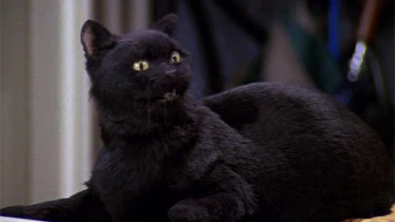 The O.G. Salem from Sabrina the Teenage Witch. Image: ABC