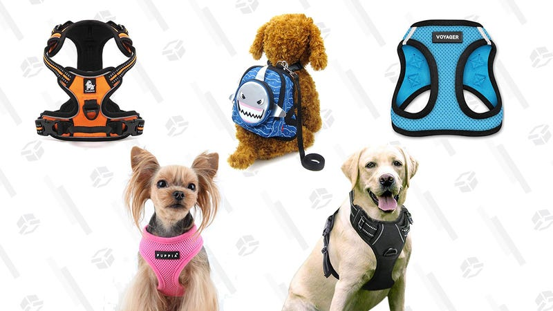 The Best Dog Harnesses For Dogs of All Sizes