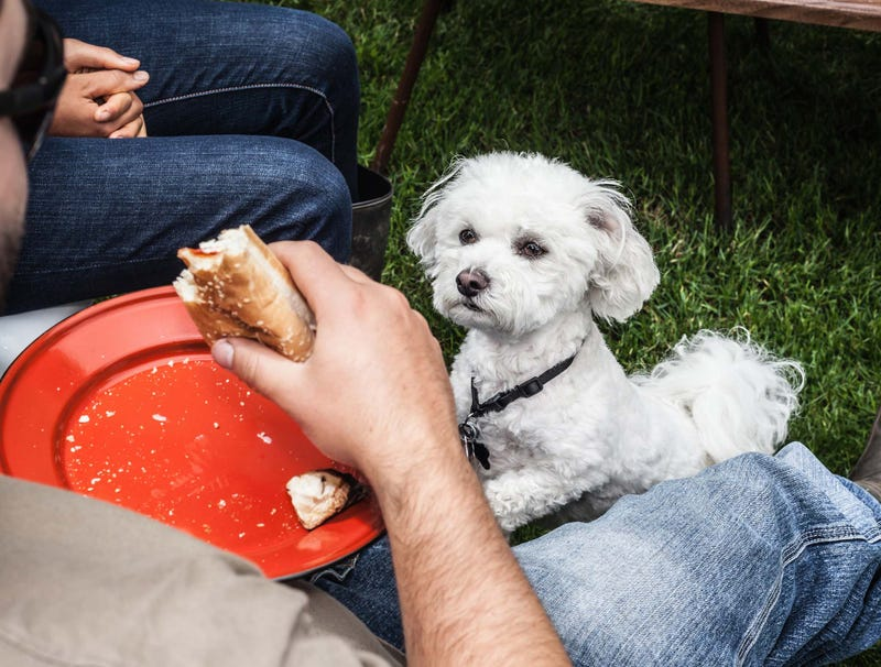 Illustration for article titled Dog Unaware It Isn't Starving