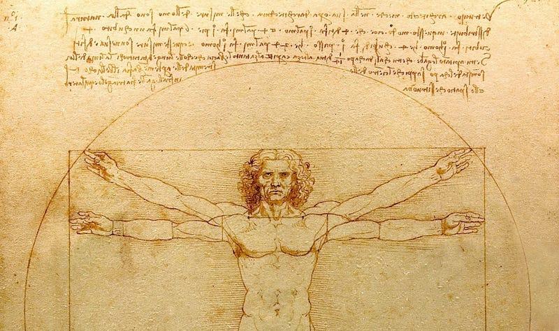 The Vitruvian Man, Leonardo da Vinci. Image: Wikimedia