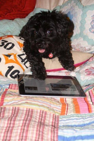 Illustration for article titled Why You Should Teach Your Dog To Use An IPad