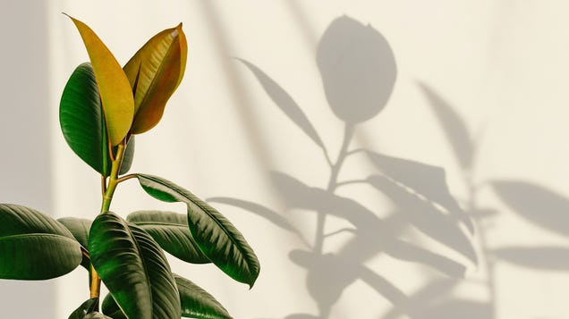 Find the Best Spots for Houseplants In Your Home With the  Shadow Trick