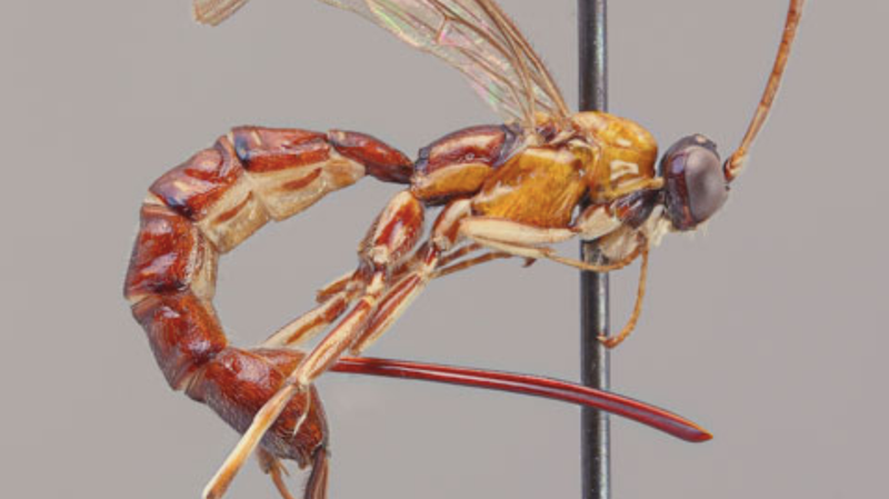 The wasp specimen