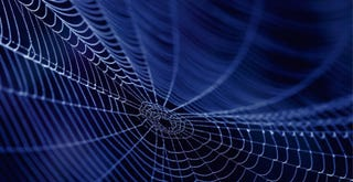 Illustration for article titled The Army Wants to Make Body Armor Out of Genetically Engineered Spider Silk