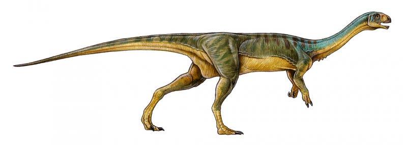 Hallan un nuevo y raro dinosaurio como el velociraptor, pero vegetariano