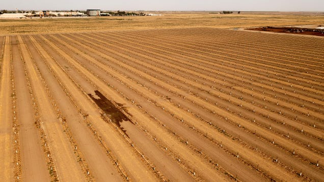 How the California Megadrought Is Affecting Food Prices