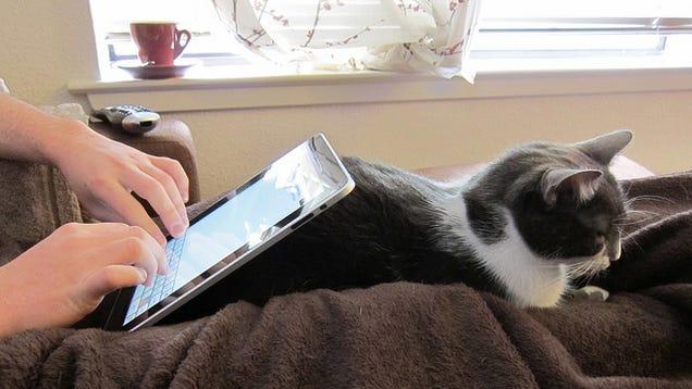 Chat en guise de support pour iPad