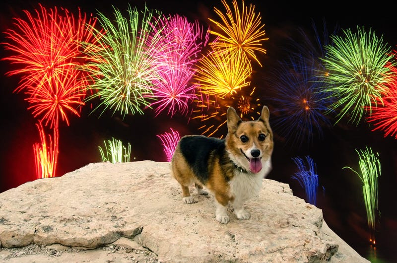 how to stop dogs being scared of fireworks