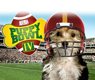 Illustration for article titled Puppy Bowl Highlights