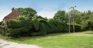 Illustration for article titled Retired man sculpts hedge into a 100-foot-long dragon