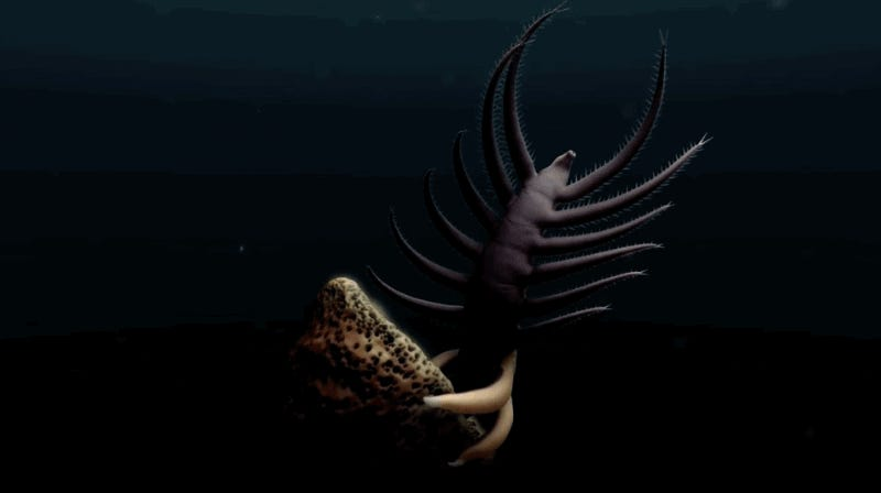 This 500-Million-Year-Old Sea Creature Boggles the Imagination