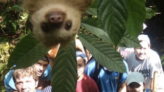 Illustration for article titled Cute Baby Sloth Photobombs a Group Picture