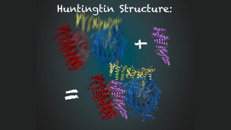The huntingtin protein in blue, yellow, and red. It is stabilized by the HAP40 protein, in purple. Image: MPI of Biochemistry/ Illustration: Gabriele Stautner, ARTIFOX