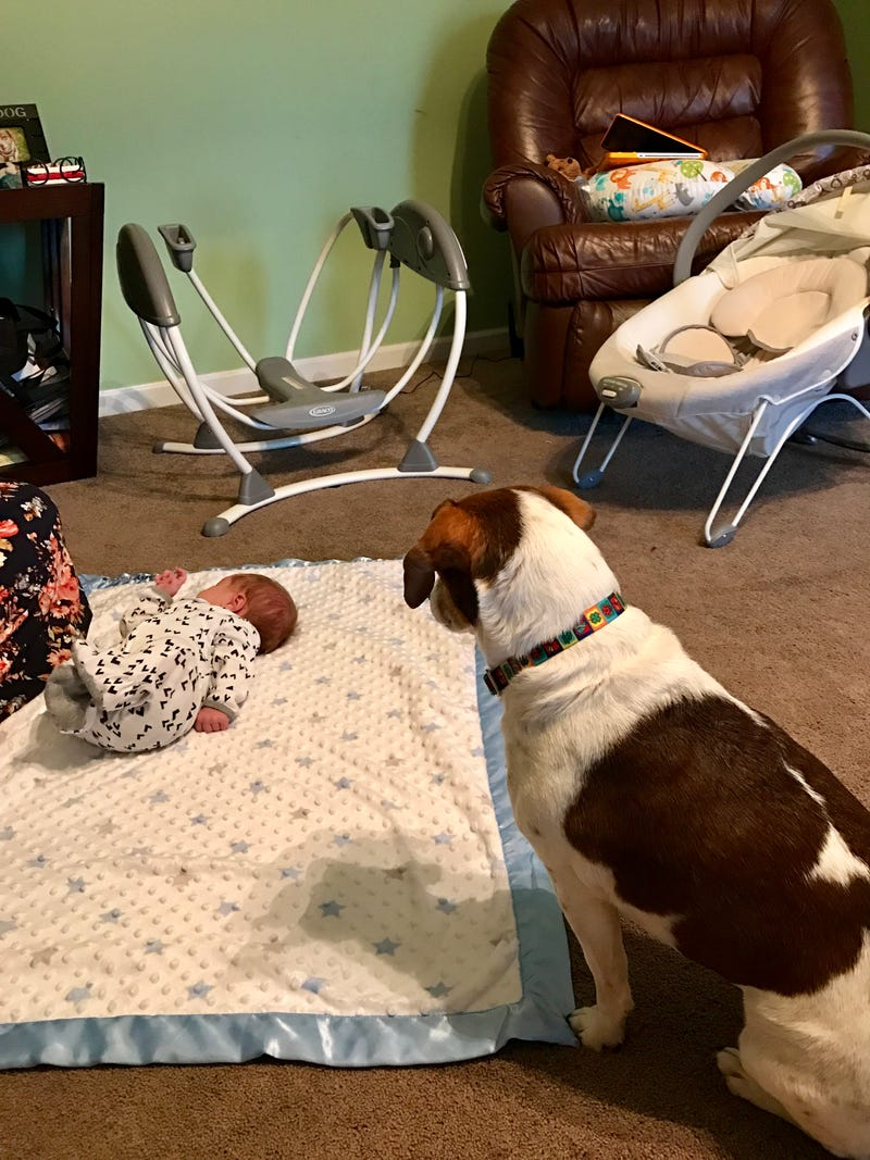 Illustration for article titled Ginger is meeting and getting to know her new little brother.