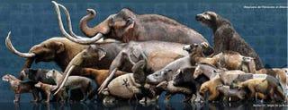 Illustration for article titled Pliestocene megafauna, ranked