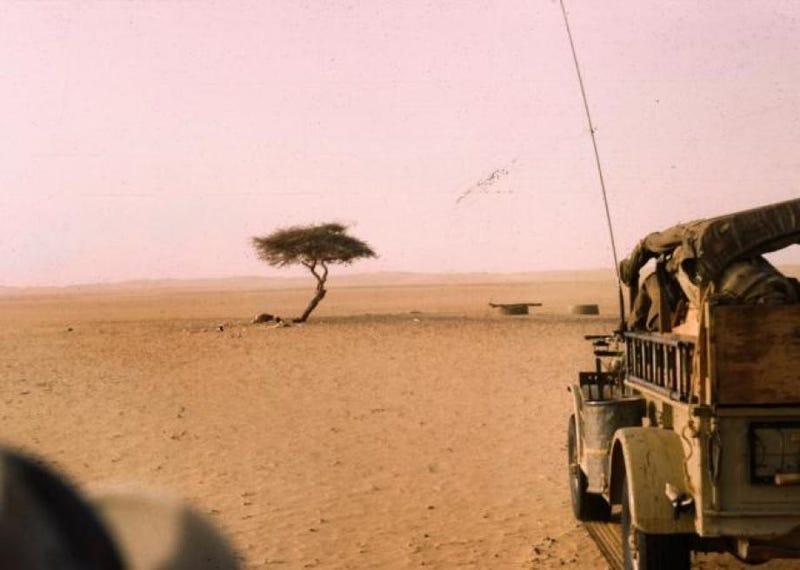 Illustration for article titled El árbol más aislado del planeta estaba en el desierto del Sahara, y murió de la forma más absurda que te puedas imaginar