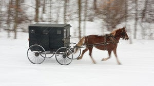 Illustration for article titled Amish Teen Leads Cops on Drunken Buggy Chase