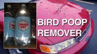 Illustration for article titled Remove Bird Droppings from Your Car with Seltzer Water