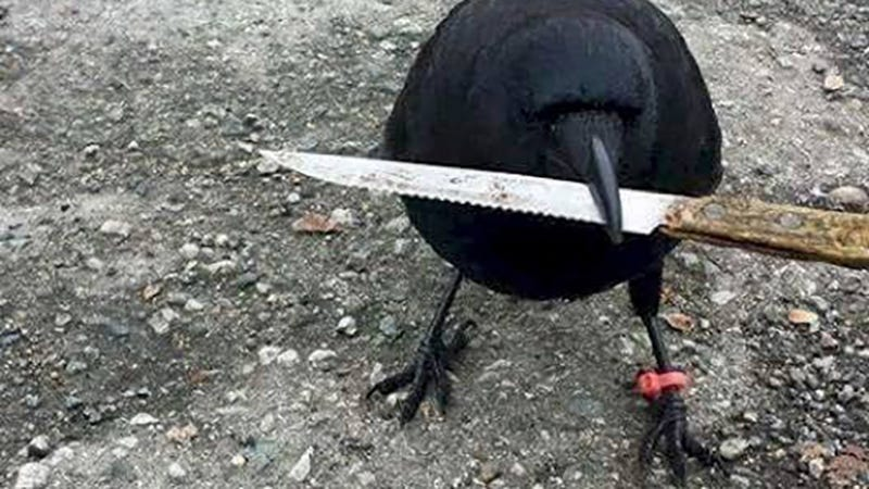 Image: Canuck holding a different knife in a Facebook photo uploaded April 11.