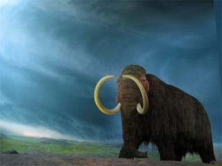Illustration for article titled A Step-By-Step Guide to Resurrecting the Woolly Mammoth