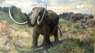 Illustration for article titled Ancient mastodon hunt reveals North America's oldest culture