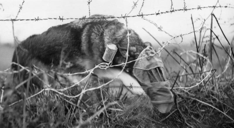 Cómo un perro con máscara antigás cambió el destino de unos soldados en la I Guerra Mundial