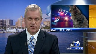 Illustration for article titled The Most Beautiful Modern Art: News Chyrons Featuring Cats