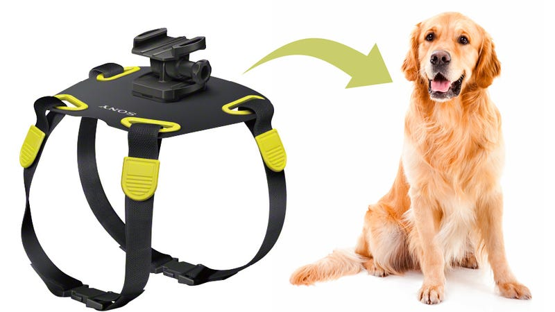 Illustration for article titled Man's Best Friend Gets Its Own Action Cam Mount Courtesy Of Sony
