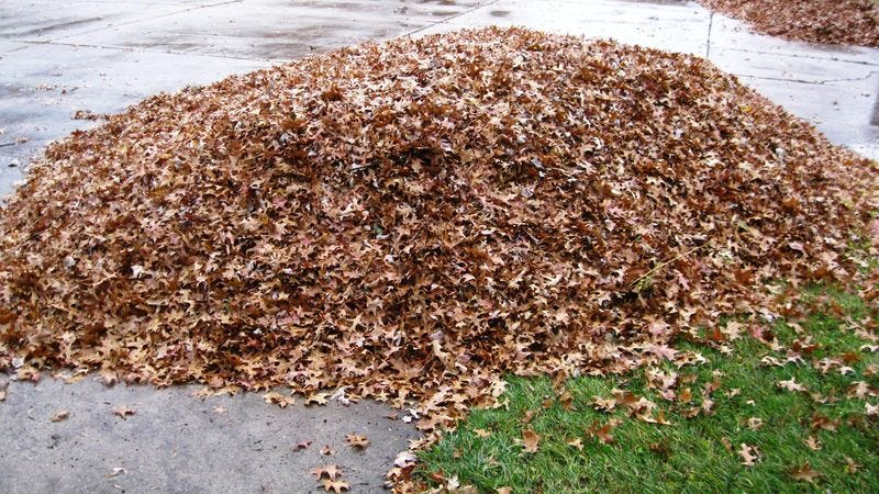 Illustration for article titled Heavy-Duty! 6 Giant Piles Of Leaves Raked Up By Real-Life People