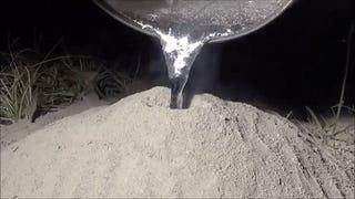 Esto es lo que pasa si viertes metal fundido en un hormiguero
