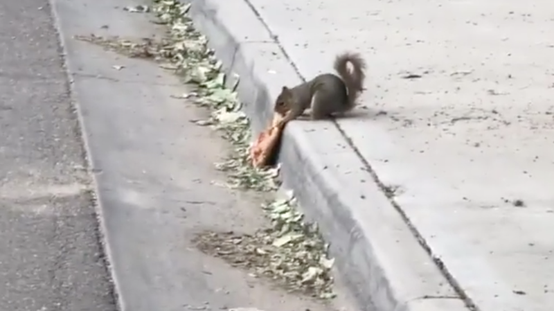 Illustration for article titled Asshole dog steals slice of pepperoni pizza from squirrel
